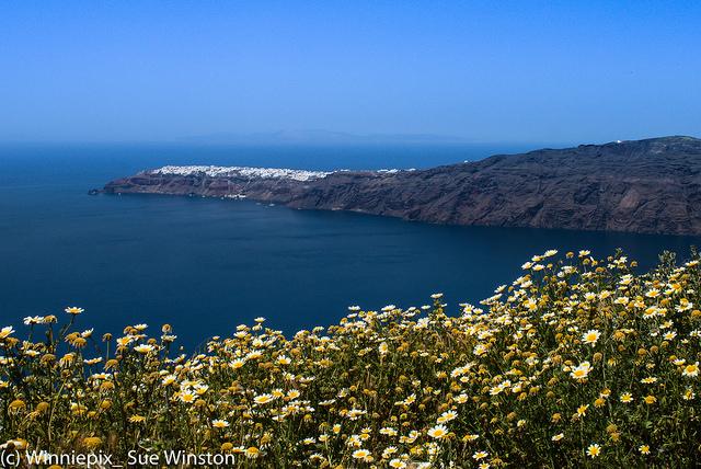 Santorini flowers Winniepie_Sue Winston_a